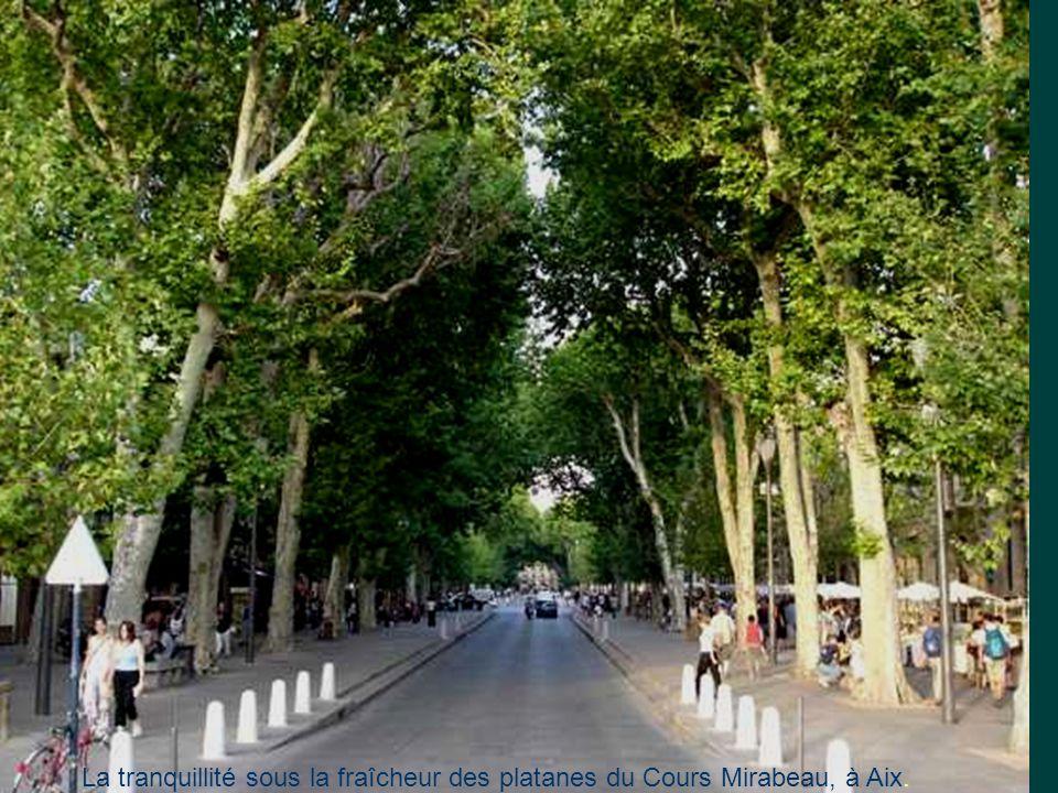 La tranquillité sous la fraîcheur des platanes du Cours Mirabeau, à Aix.