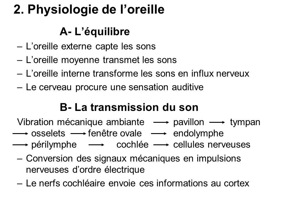 2. Physiologie de l'oreille