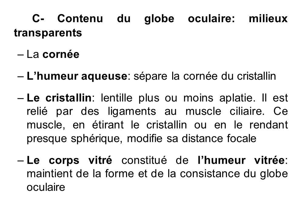 C- Contenu du globe oculaire: milieux transparents