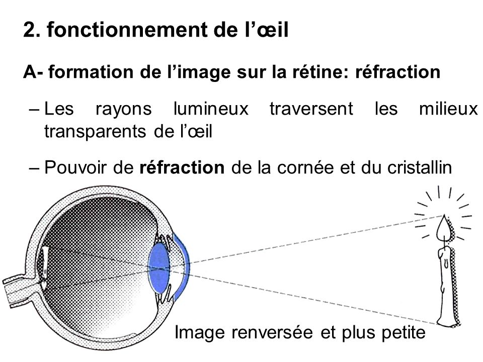 2. fonctionnement de l'œil