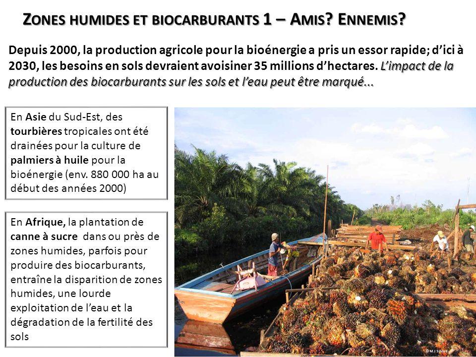Zones humides et biocarburants 1 – Amis Ennemis