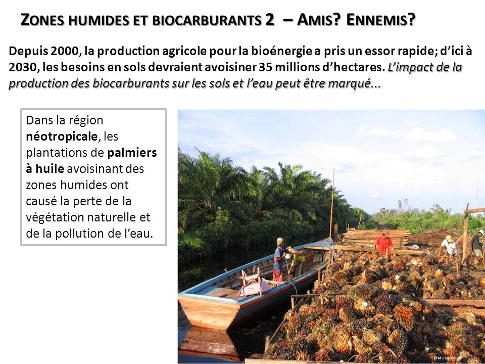Zones humides et biocarburants 2 – Amis Ennemis