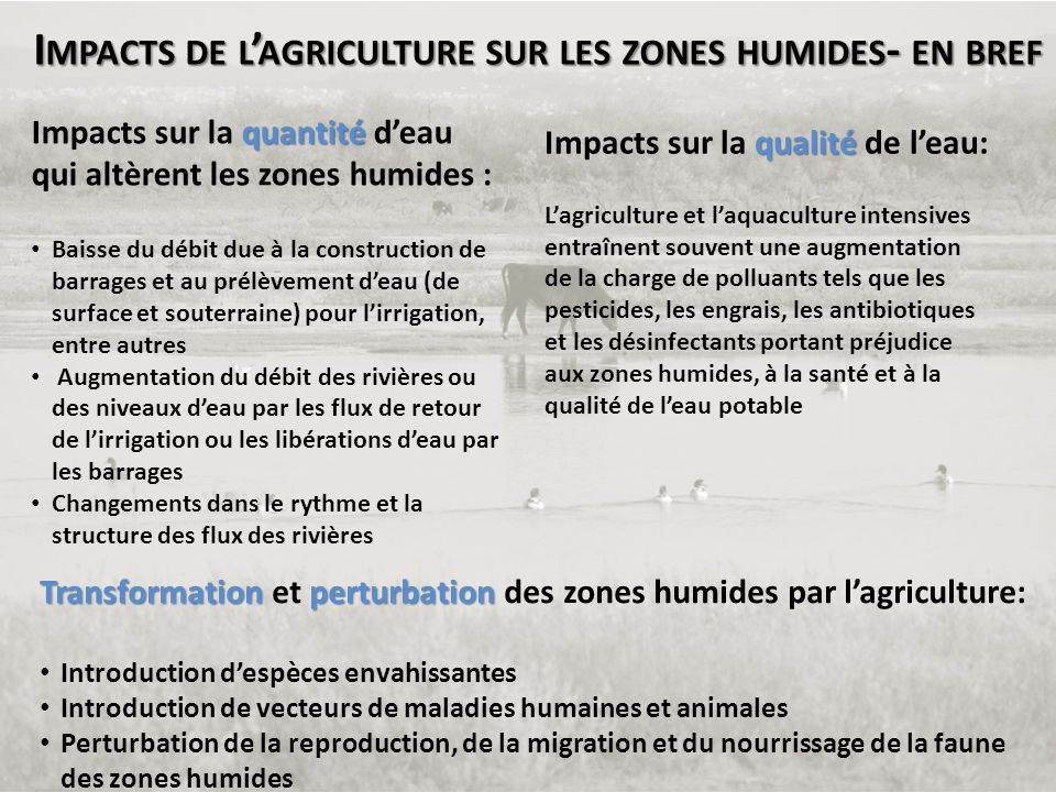 Impacts de l'agriculture sur les zones humides- en bref