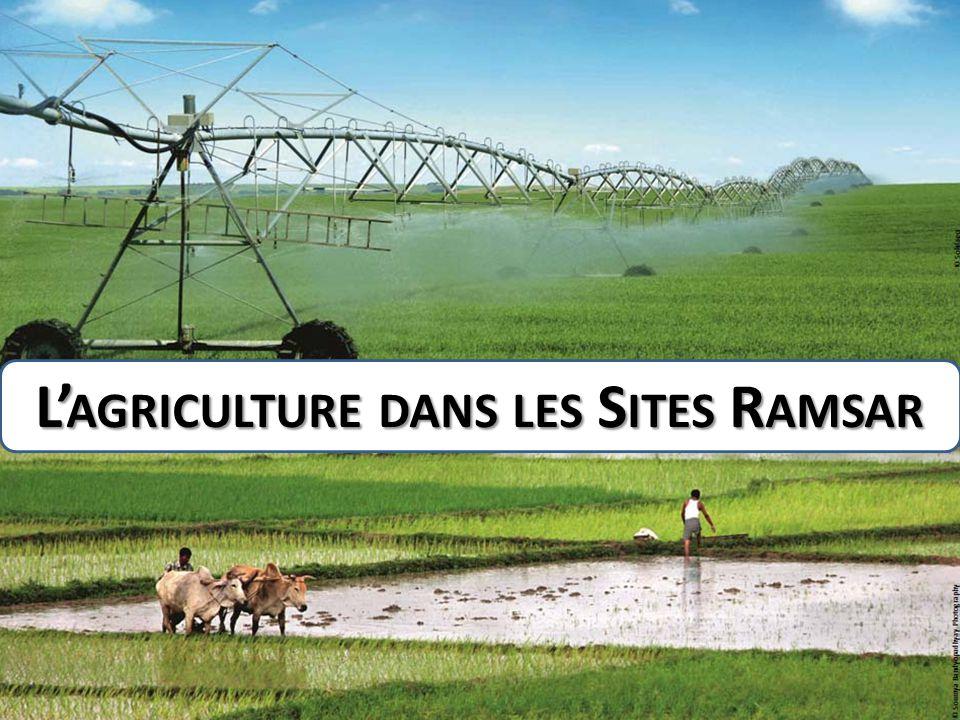 L'agriculture dans les Sites Ramsar