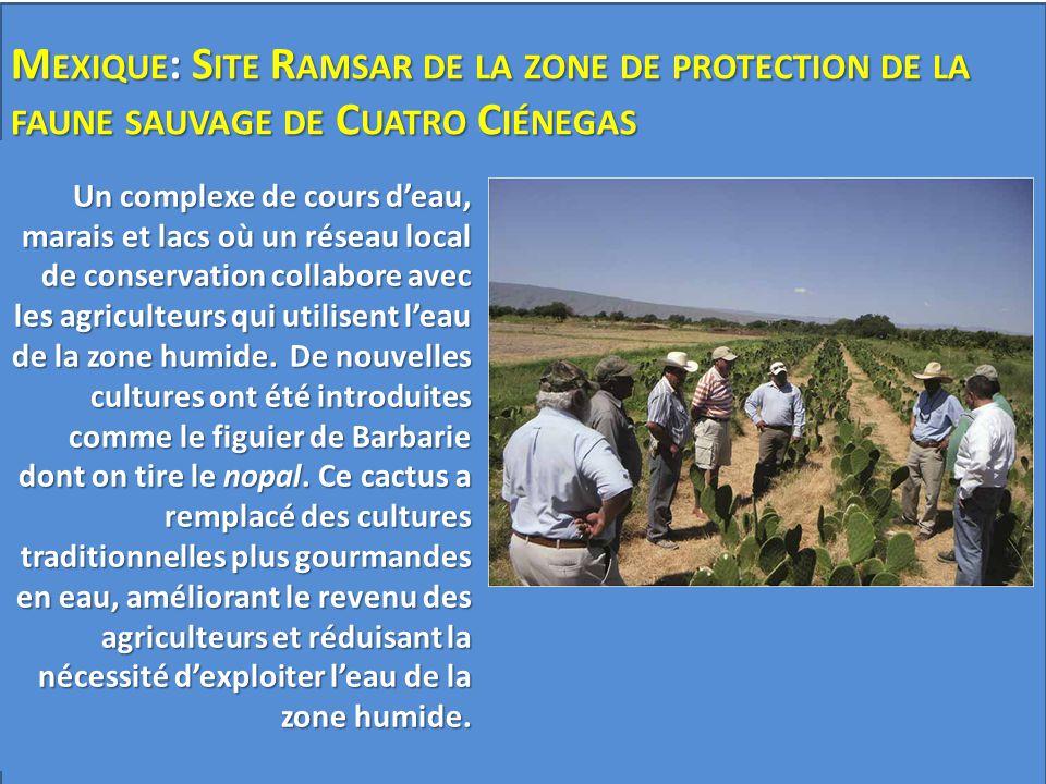 Mexique: Site Ramsar de la zone de protection de la faune sauvage de Cuatro Ciénegas