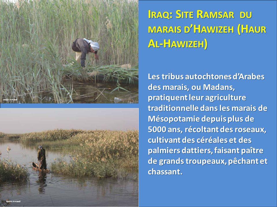 Iraq: Site Ramsar du marais d'Hawizeh (Haur Al-Hawizeh) Les tribus autochtones d'Arabes des marais, ou Madans, pratiquent leur agriculture traditionnelle dans les marais de Mésopotamie depuis plus de 5000 ans, récoltant des roseaux, cultivant des céréales et des palmiers dattiers, faisant paître de grands troupeaux, pêchant et chassant.