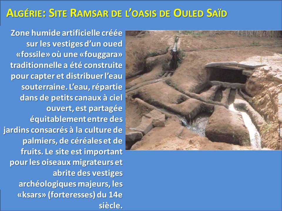 Algérie: Site Ramsar de l'oasis de Ouled Saïd