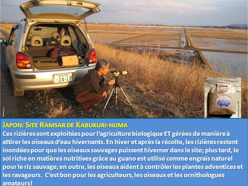 Japon: Site Ramsar de Kabukuri-numa