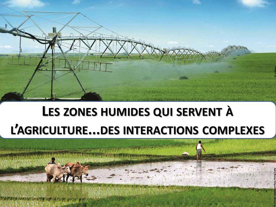 Les zones humides qui servent à l'agriculture