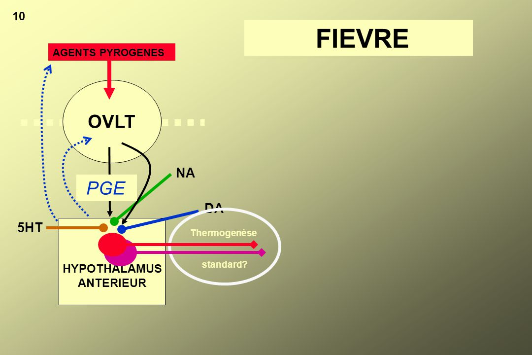 FIEVRE OVLT PGE NA DA 5HT 10 HYPOTHALAMUS ANTERIEUR AGENTS PYROGENES