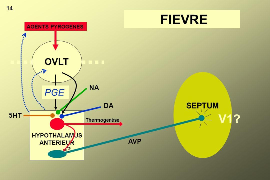 FIEVRE V1 OVLT PGE SEPTUM NA DA 5HT AVP - 14 HYPOTHALAMUS ANTERIEUR