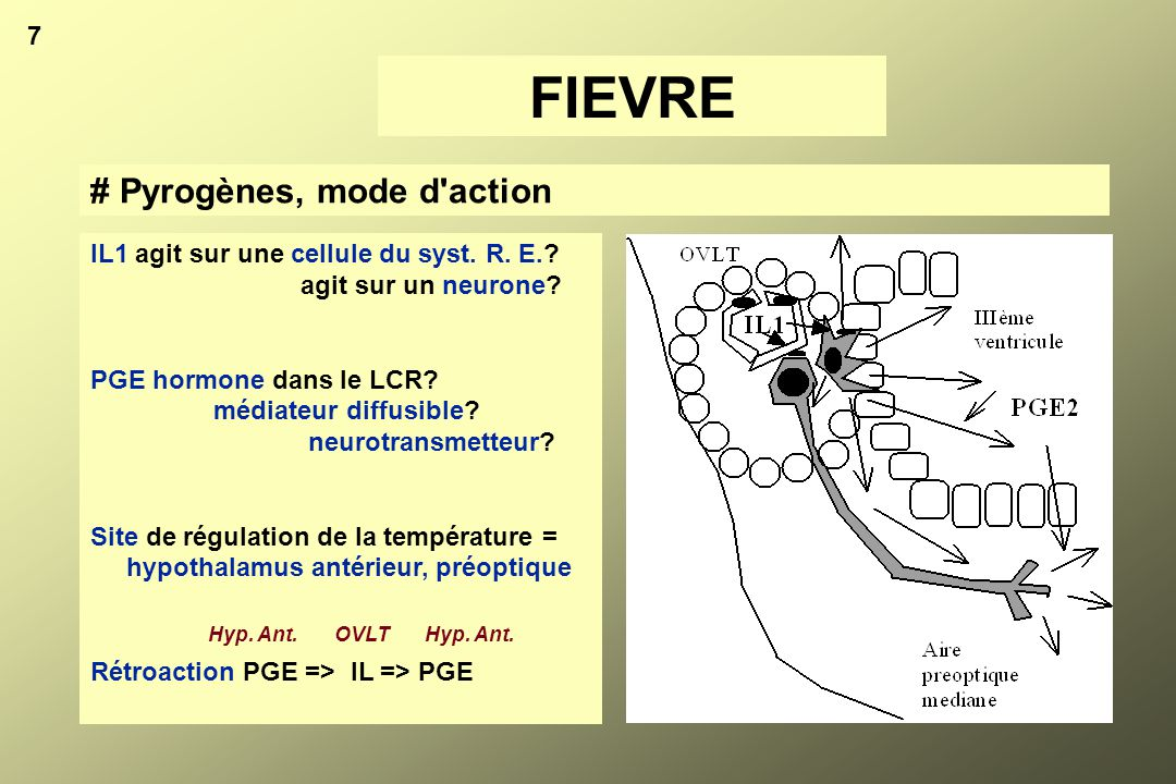 FIEVRE # Pyrogènes, mode d action 7