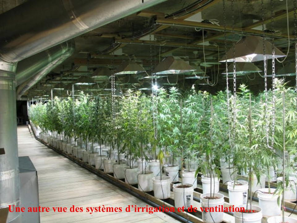 Une autre vue des systèmes d'irrigation et de ventilation…