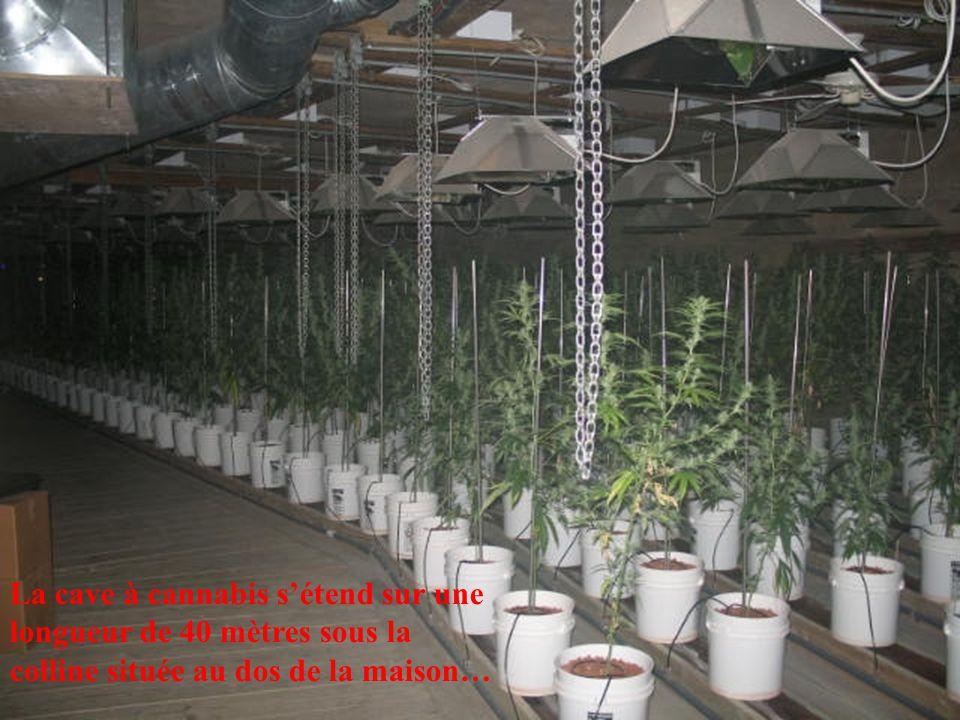 La cave à cannabis s'étend sur une longueur de 40 mètres sous la colline située au dos de la maison…
