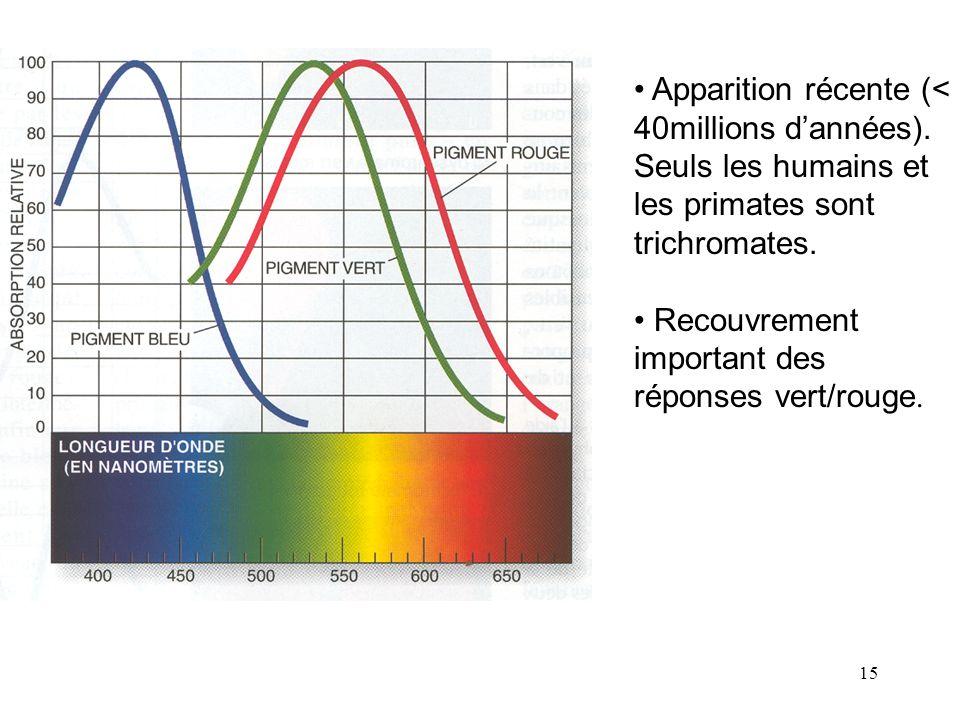 Apparition récente (< 40millions d'années)