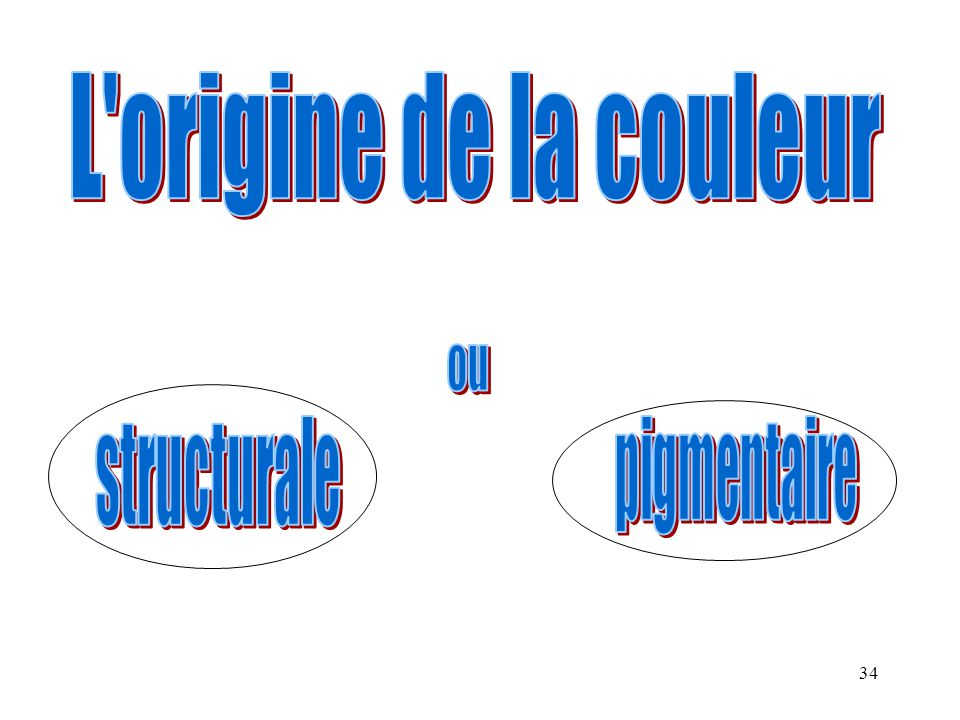 L origine de la couleur ou pigmentaire structurale