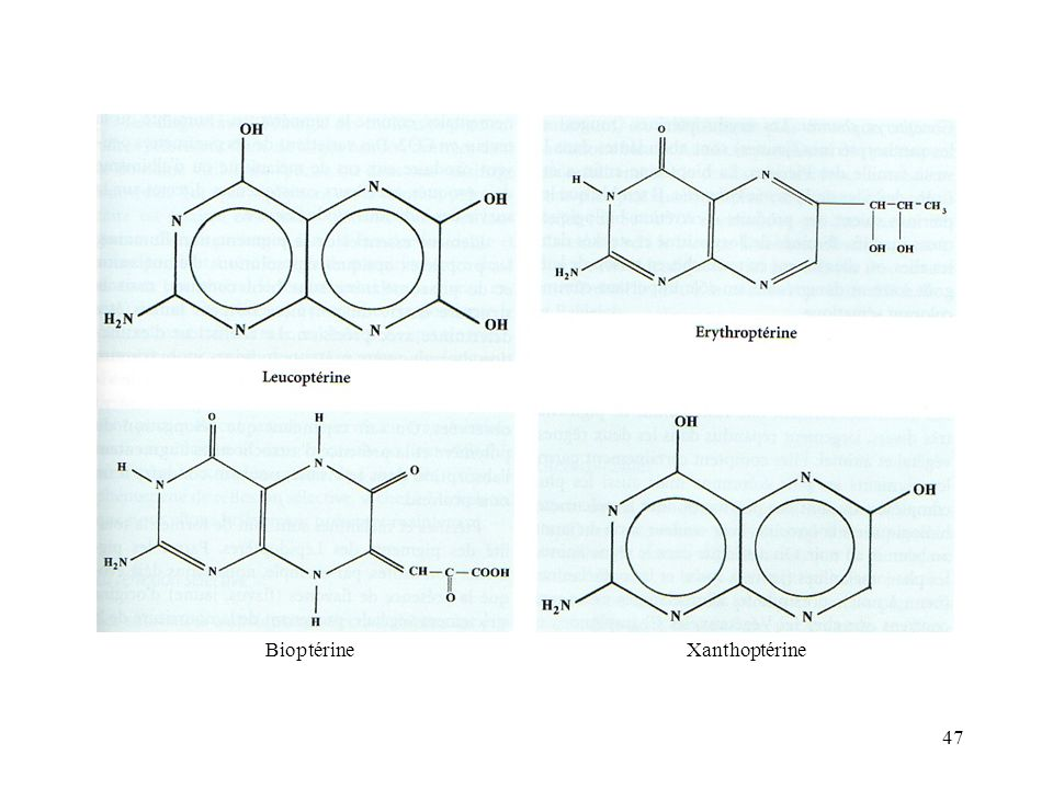 Bioptérine Xanthoptérine