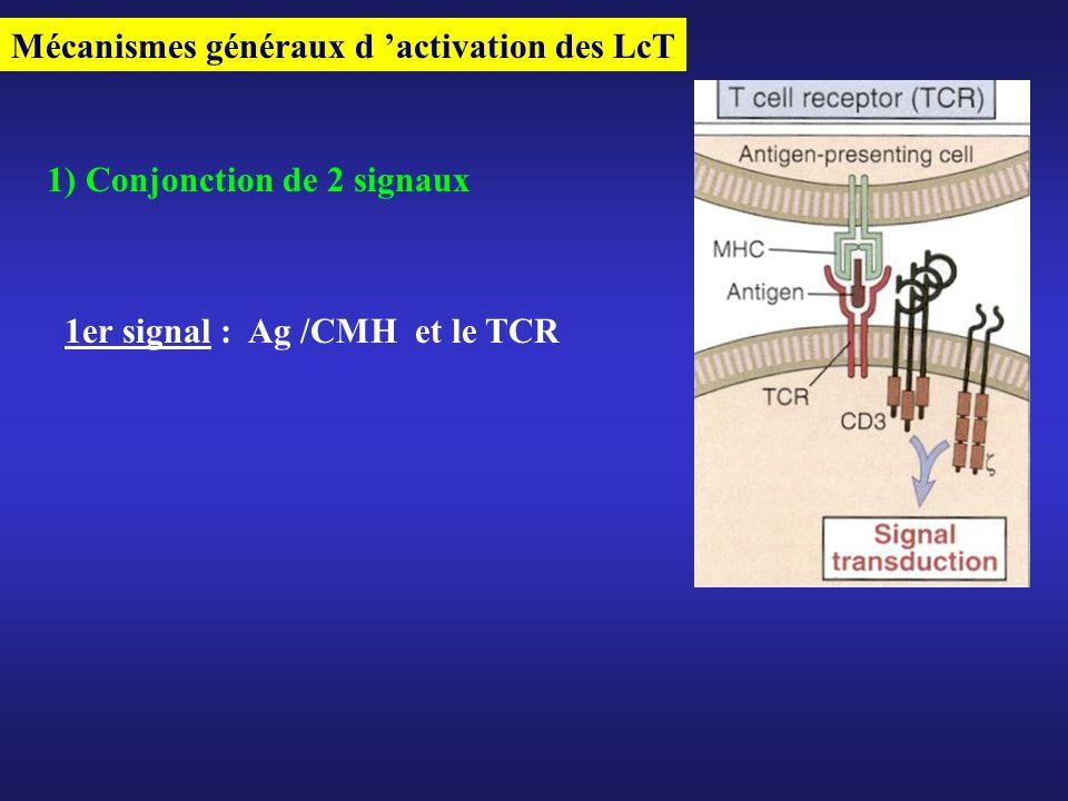 Mécanismes généraux d 'activation des LcT