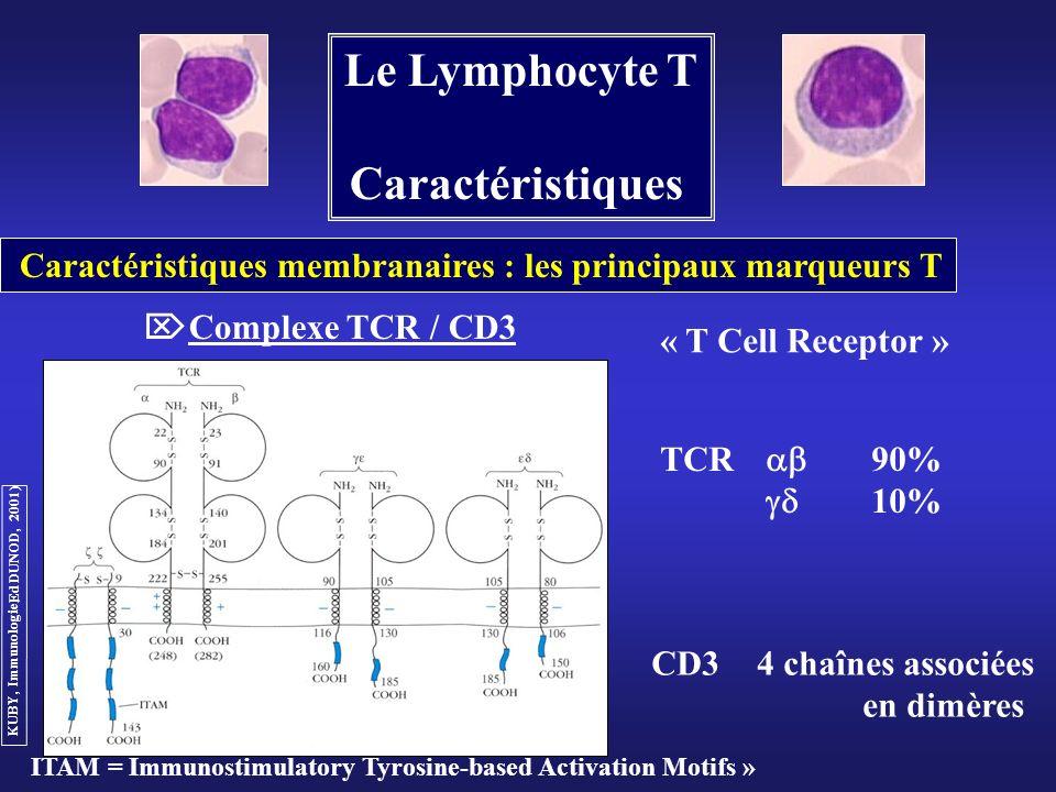 Le Lymphocyte T Caractéristiques