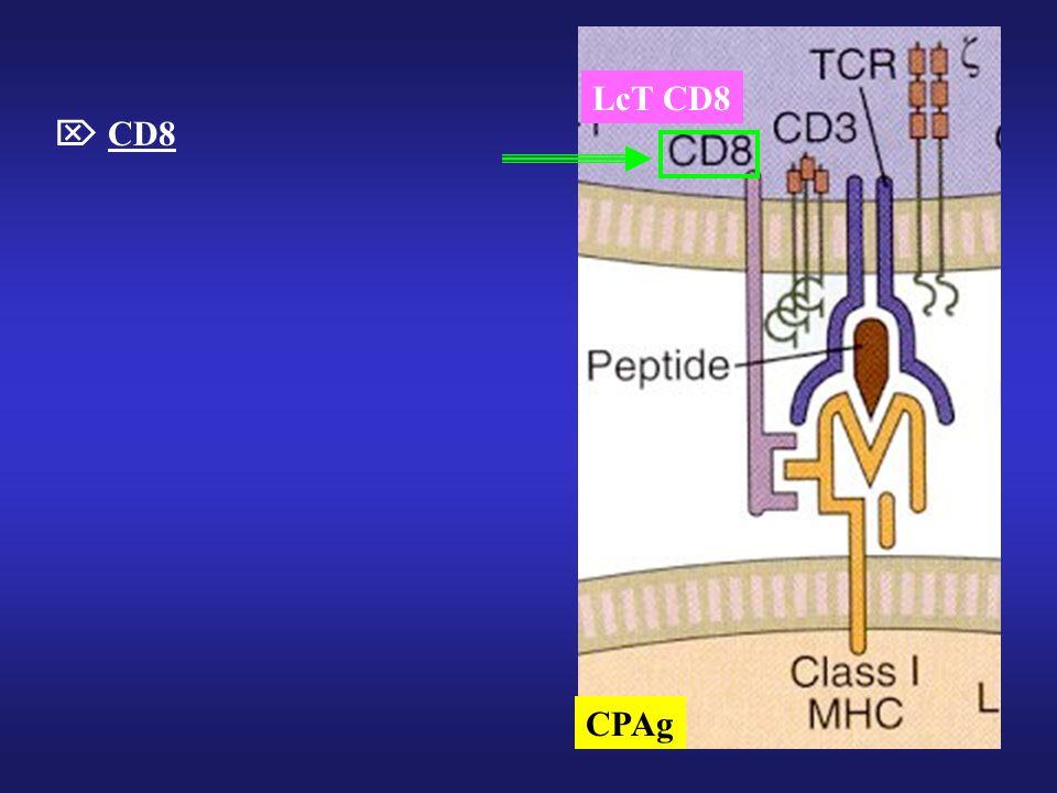 CPAg LcT CD8  CD8