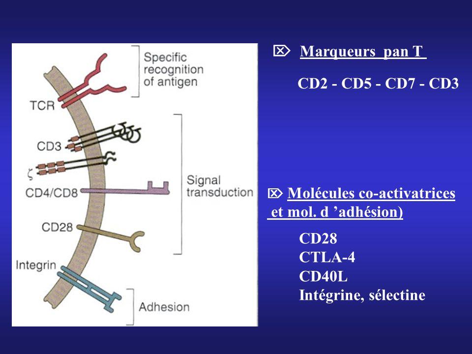  Marqueurs pan T CD2 - CD5 - CD7 - CD3 et mol. d 'adhésion) CD28