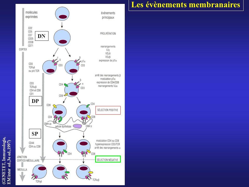 Les évènements membranaires