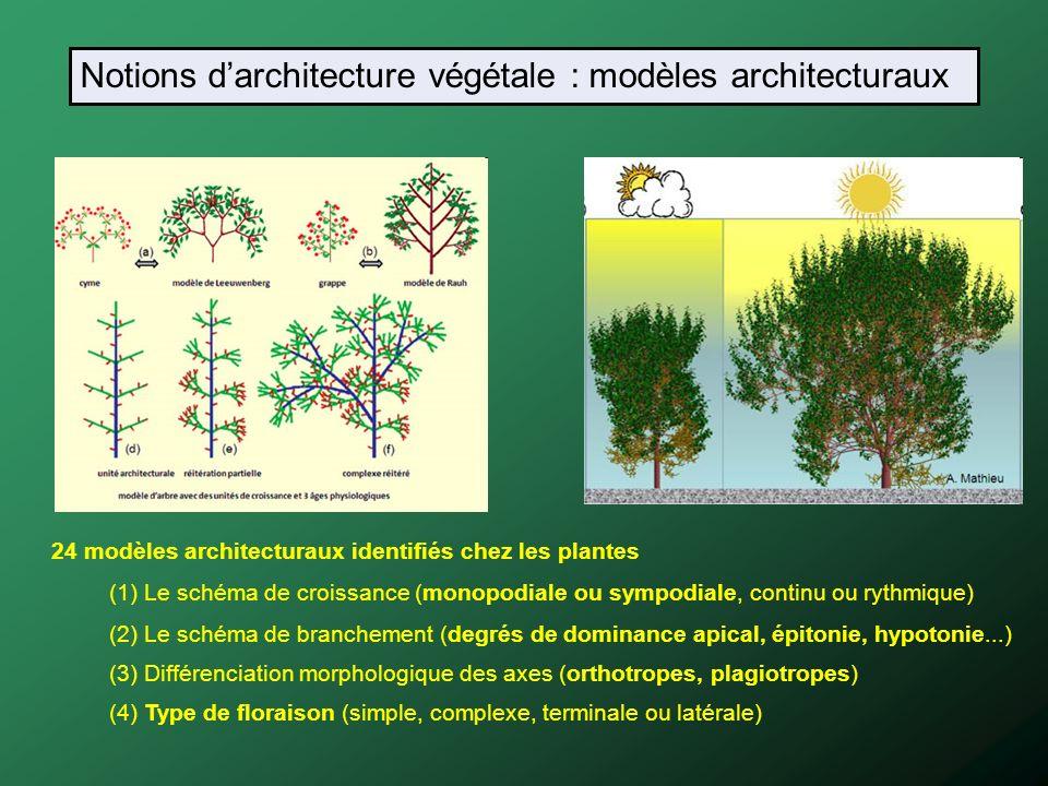 Notions d'architecture végétale : modèles architecturaux