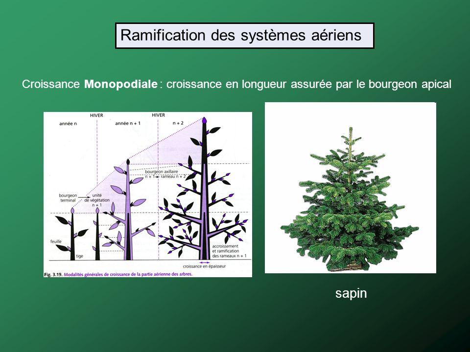 Ramification des systèmes aériens