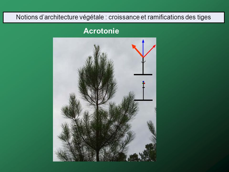 Licence professionnelle ppt video online t l charger for Architecture vegetale