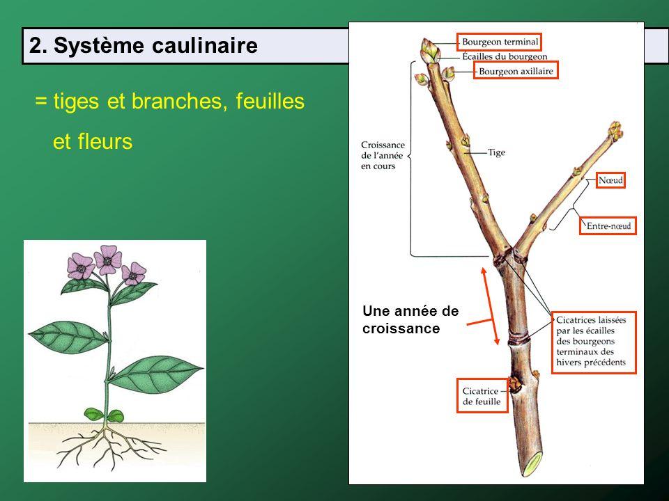 = tiges et branches, feuilles et fleurs