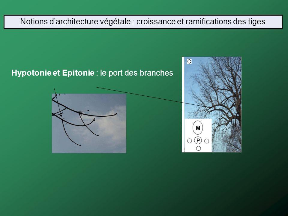 Notions d'architecture végétale : croissance et ramifications des tiges