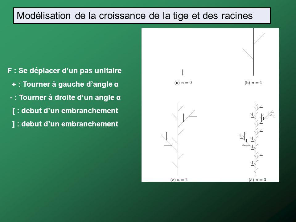 Modélisation de la croissance de la tige et des racines