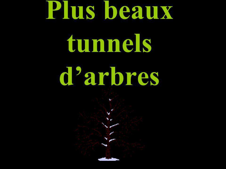 Plus beaux tunnels d'arbres