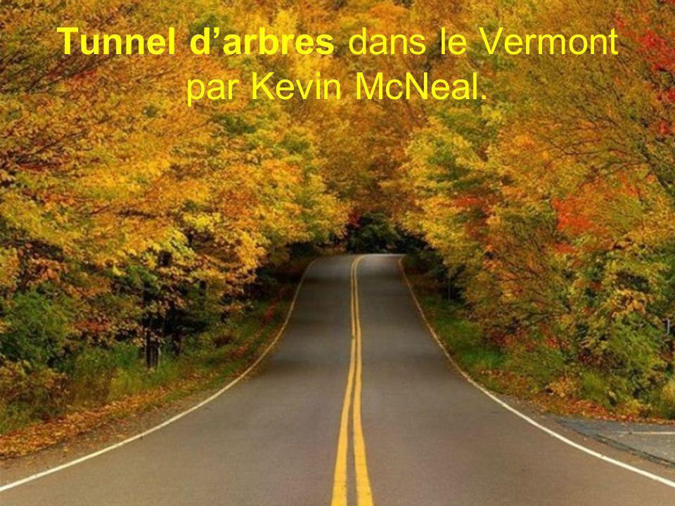 Tunnel d'arbres dans le Vermont par Kevin McNeal.