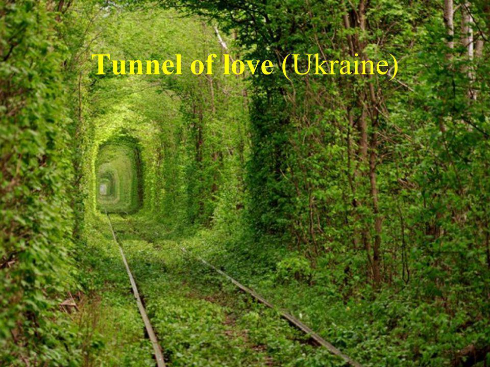 Tunnel of love (Ukraine)