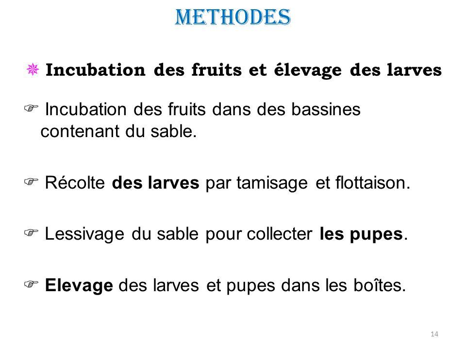  Incubation des fruits et élevage des larves