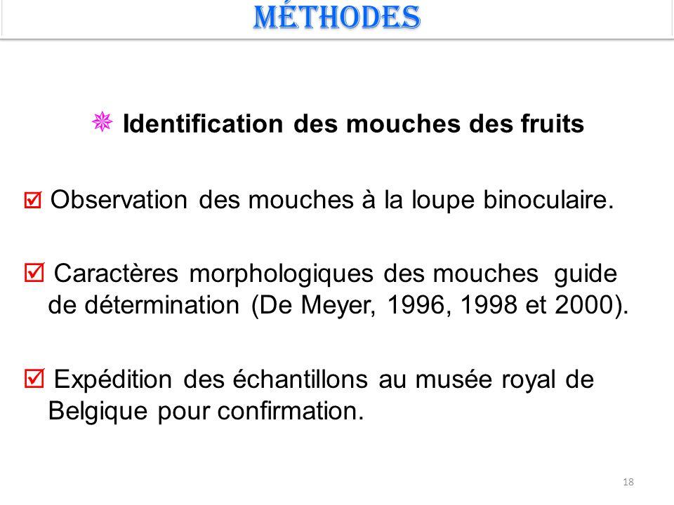  Identification des mouches des fruits