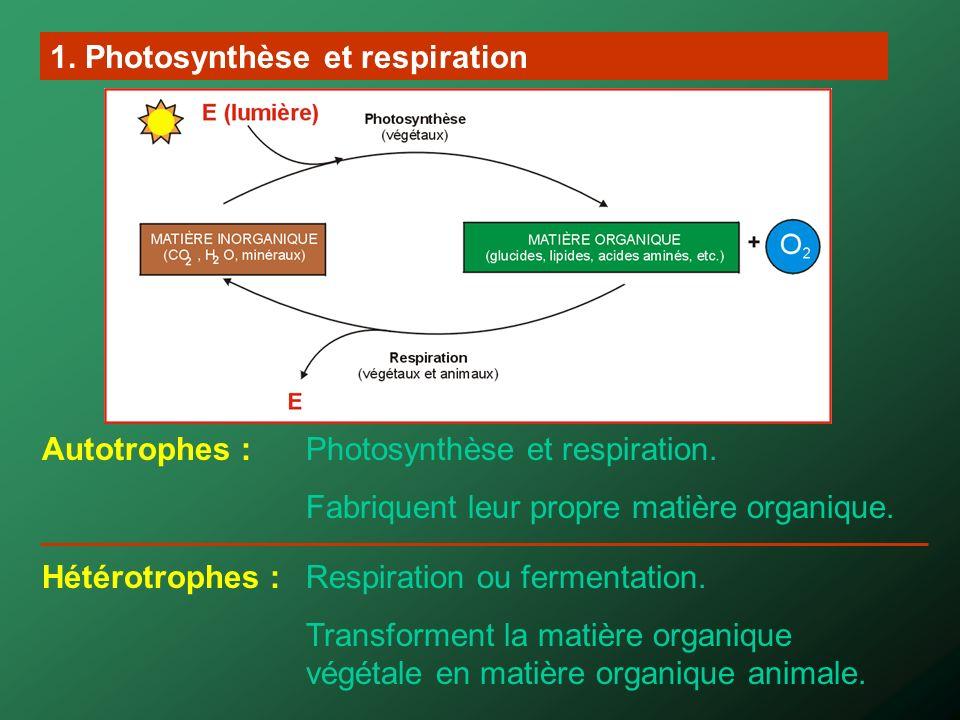 1. Photosynthèse et respiration