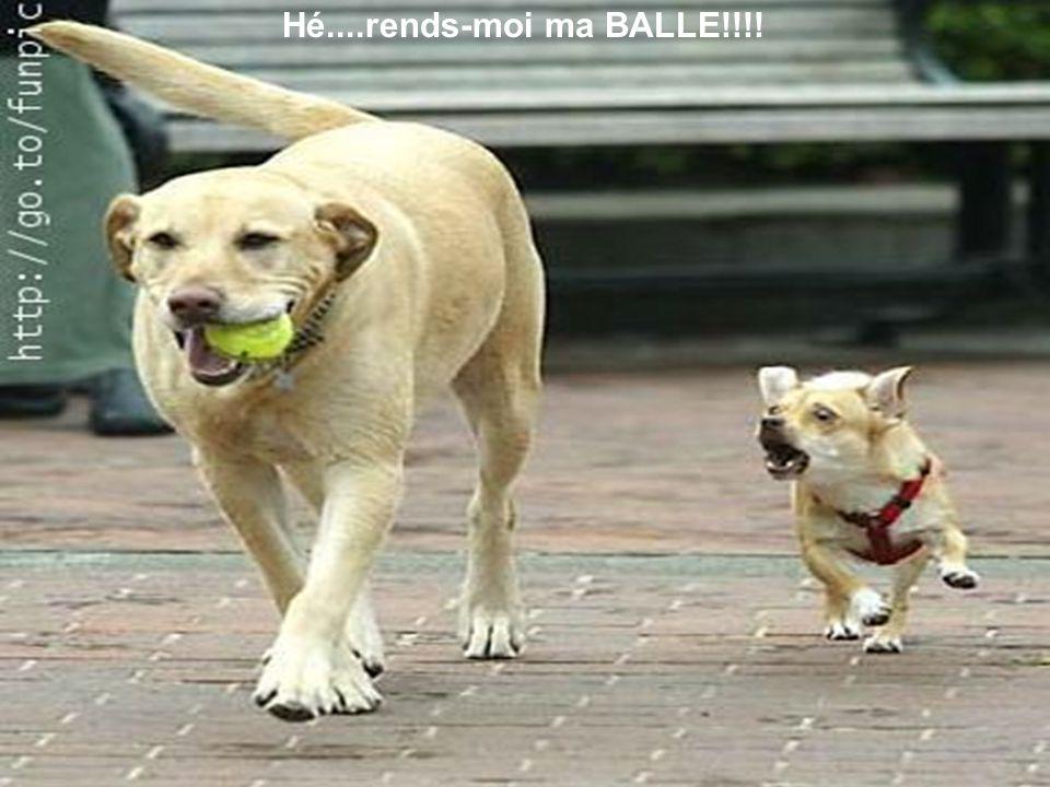 Hé....rends-moi ma BALLE!!!!