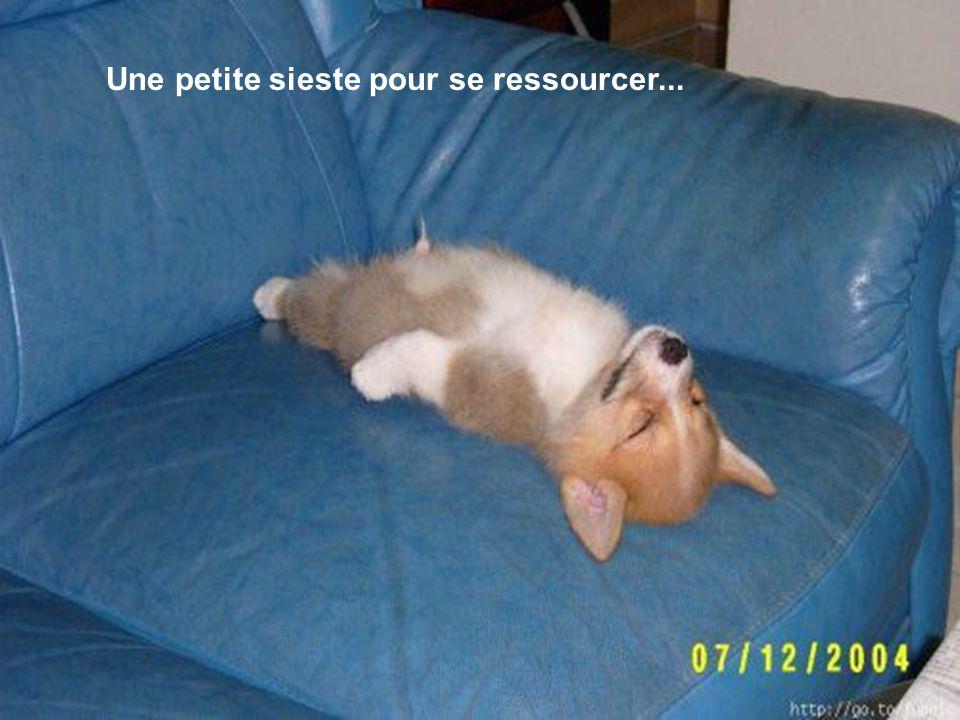 Une petite sieste pour se ressourcer...