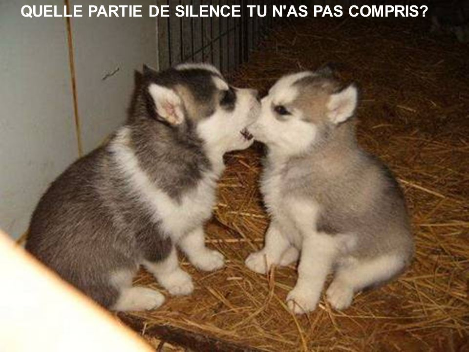 QUELLE PARTIE DE SILENCE TU N AS PAS COMPRIS