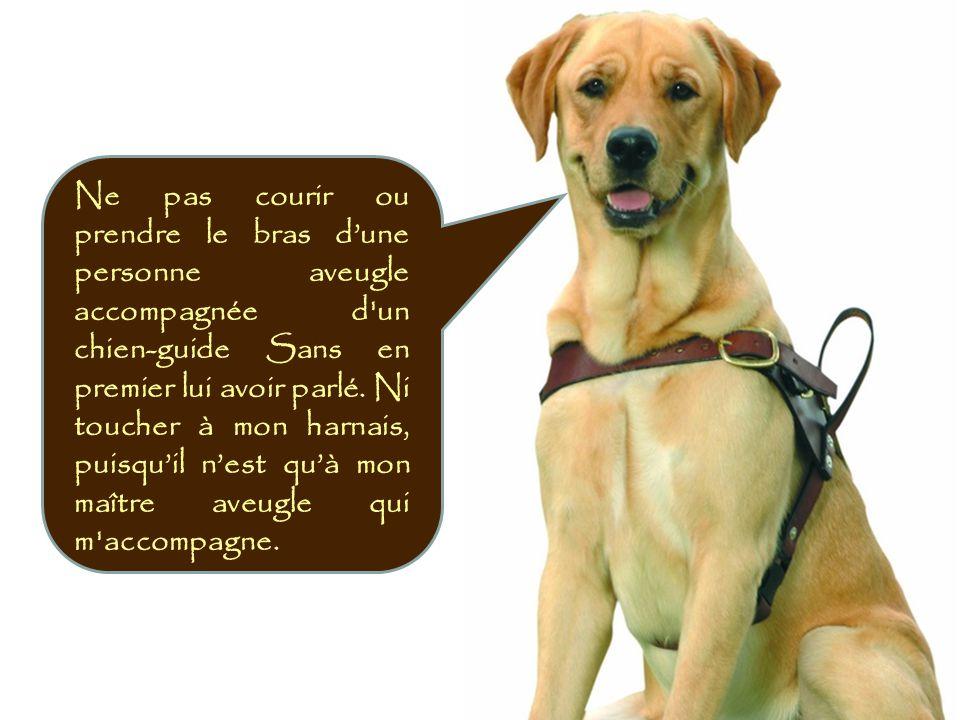 Ne pas courir ou prendre le bras d'une personne aveugle accompagnée d un chien-guide Sans en premier lui avoir parlé. Ni toucher à mon harnais, puisqu'il n'est qu'à mon maître aveugle qui m accompagne.