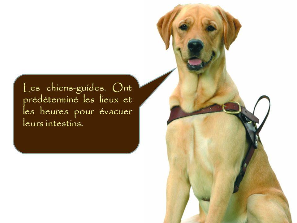 Les chiens-guides. Ont prédéterminé les lieux et les heures pour évacuer leurs intestins.