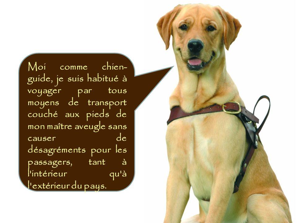 Moi comme chien-guide, je suis habitué à voyager par tous moyens de transport couché aux pieds de mon maître aveugle sans causer de désagréments pour les passagers, tant à l intérieur qu à l extérieur du pays.