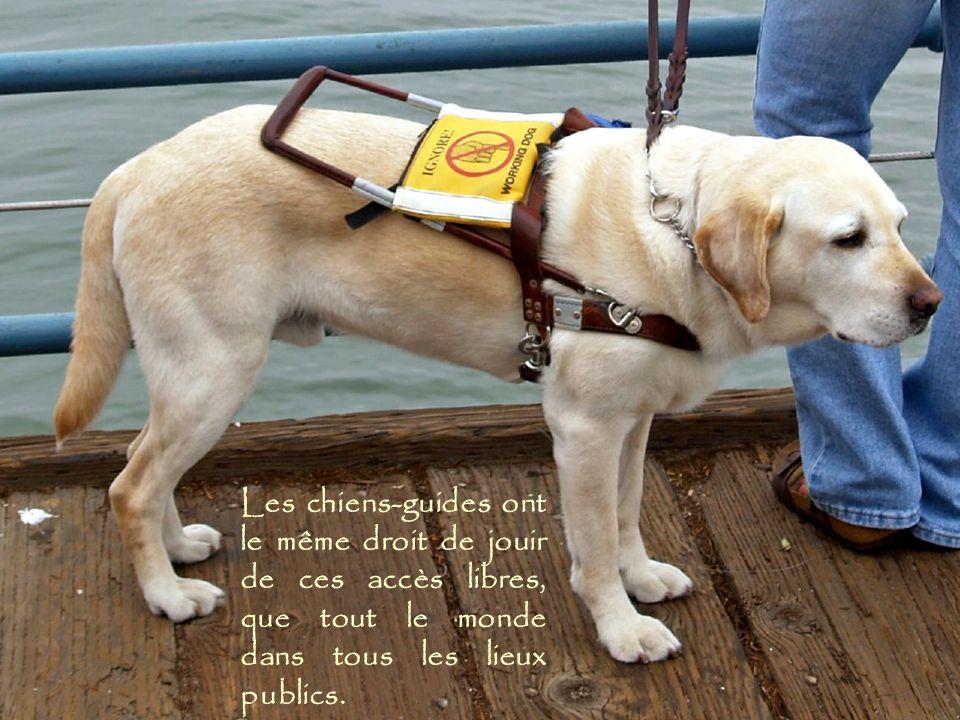 Les chiens-guides ont le même droit de jouir de ces accès libres, que tout le monde dans tous les lieux publics.