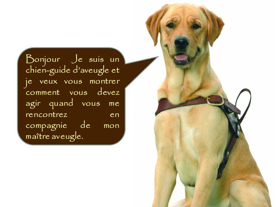 Bonjour Je suis un chien-guide d'aveugle et je veux vous montrer comment vous devez agir quand vous me rencontrez en compagnie de mon maître aveugle.