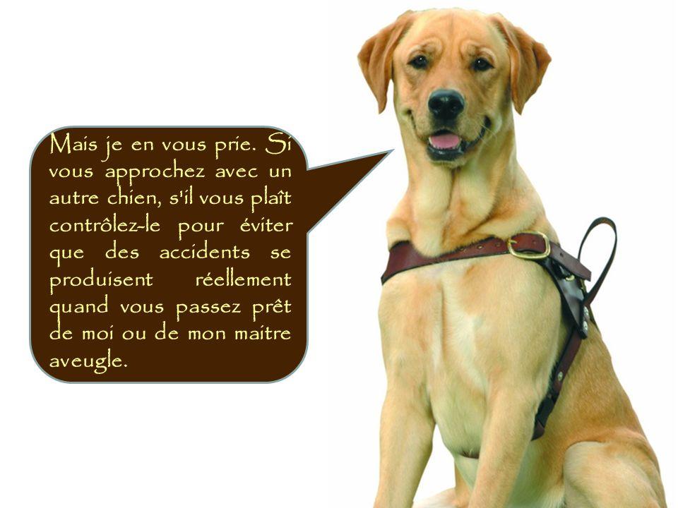 Mais je en vous prie. Si vous approchez avec un autre chien, s il vous plaît contrôlez-le pour éviter que des accidents se produisent réellement quand vous passez prêt de moi ou de mon maitre aveugle.