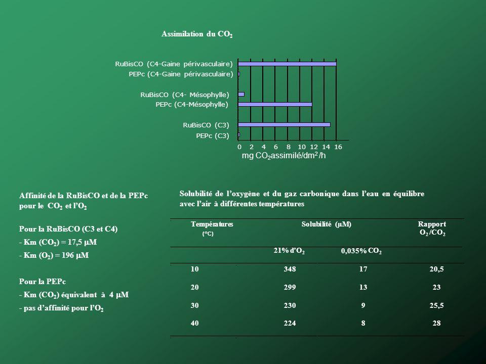 Affinité de la RuBisCO et de la PEPc pour le CO2 et l'O2