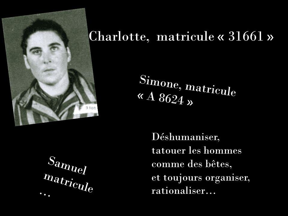 Charlotte, matricule « 31661 »
