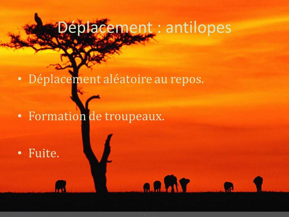 Déplacement : antilopes